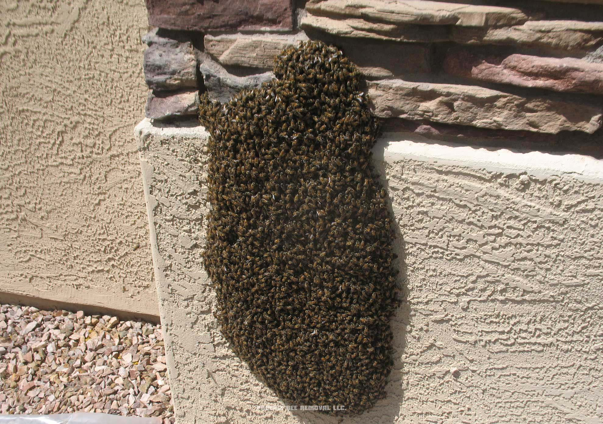 $80 Bee Removal